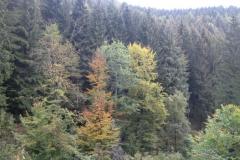 herfst-2012-begint-te-komen-4