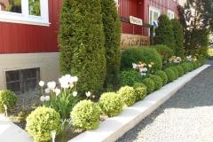 de tulpen staan er prachtig bij 22-5-16