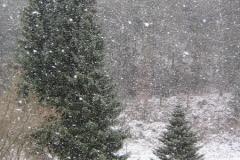 de-1e-sneeuw-in-lautenthal-02-12-12-1