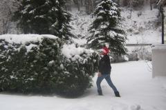 de-conifeer-bezwijkt-bijna-onder-de-sneeuw