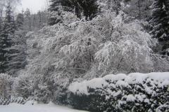 mooie-sneeuwtuin-op-11-dec-2012-2